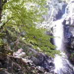 boyana falls - through the forest