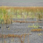 aldomirovsko swamp - swamp view