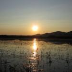 aldomirovsko swamp - sunset in the swamp