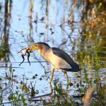 aldomirovsko swamp - a photo of a bird in the swamp