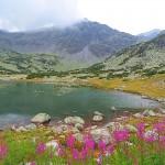 musala lakes - summer landscape