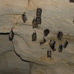 orlova chuka cave - bats inside the cave