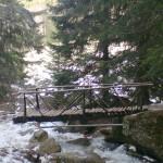bridge above the river near the golden bridges