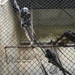 city-of-sofia-zoo-03