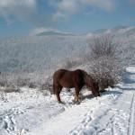 yundola bulgarian winter and ski resort