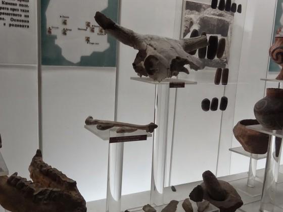 Регионален исторически музей – Враца