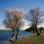 beli lom dam - a photo of trees on the coast