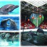 varna dolphinarium show