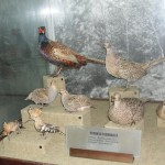 the museum of natural science in the village of cherni osum - Bulgaria